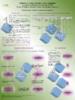 2015_-_Poster_repertoire_des_outils_d_evaluation_des_aaS.pdf - application/pdf